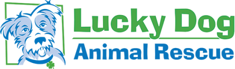 Luck Dog logo